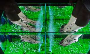 Fish massage - массаж рыбками Гарра Руфа