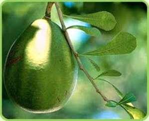 Масло авокадо в косметологии