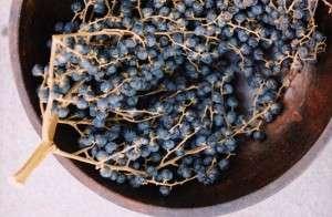 Можжевельник – ароматный шишкоплод