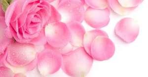 Экстракт розы в косметических средствах