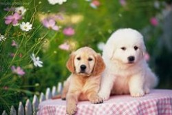 Здоровье домашних собак