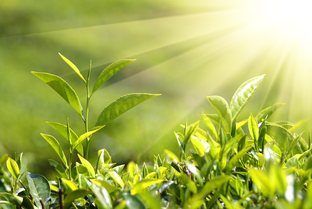 Стебель растения