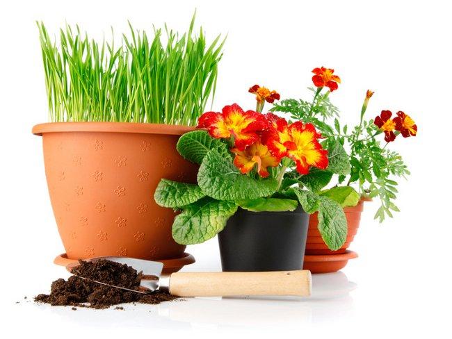 Пересадка комнатных растений: уход по правилам