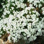 Психоэнергетика садовых растений
