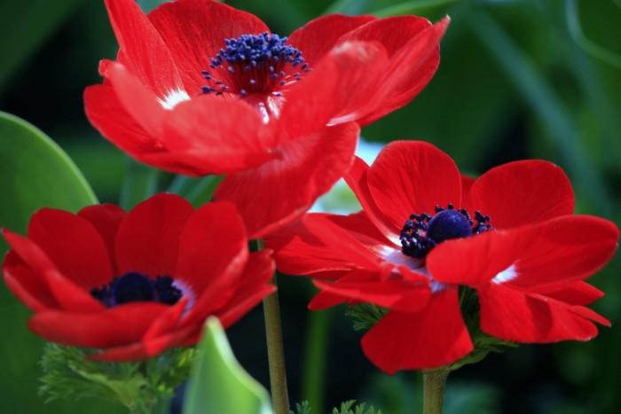 Цветущие знахари